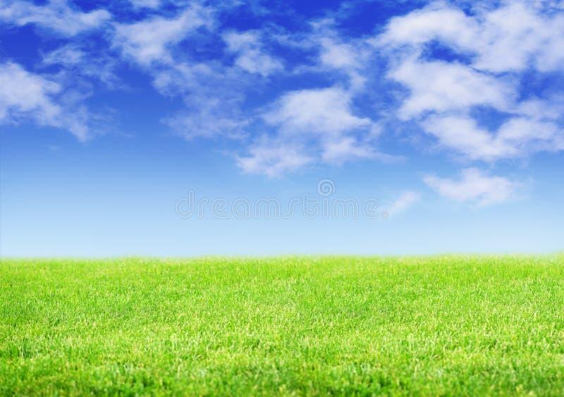 Zielony fileld trawa i niebieskie niebo obrazy royalty free