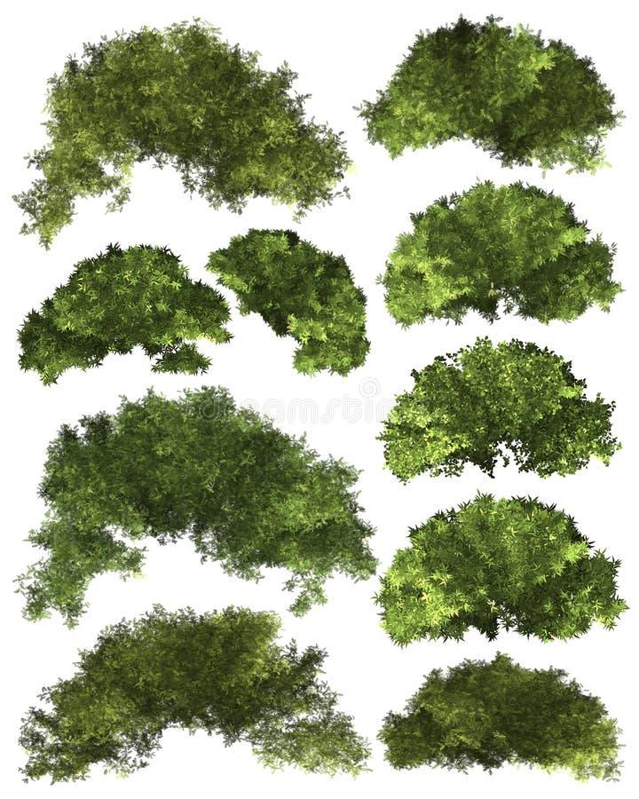 Zielony Forrest drzewa tło ustawia Ilustracyjnego drzewa obraz royalty free