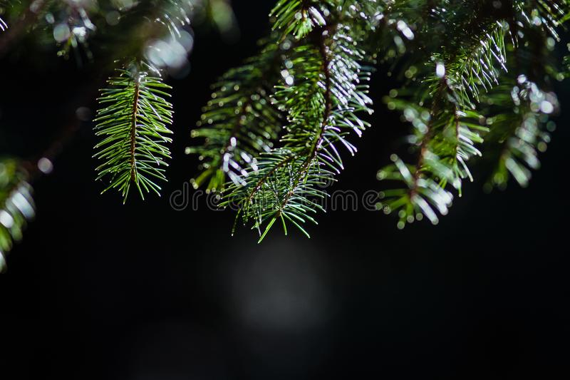 Zielony gałęziasty haning od above zdjęcie stock