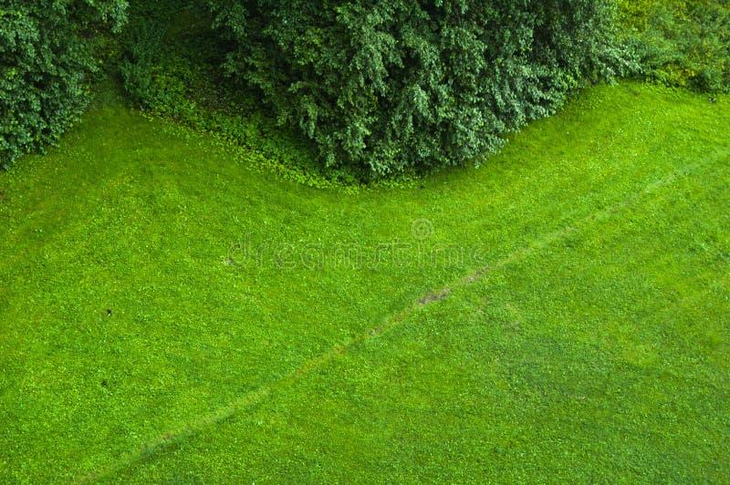 zielony gazon obraz royalty free