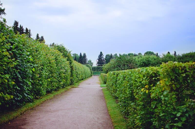 Zielony gazon w kolorowym lato ogródzie piękny ogród fotografia stock