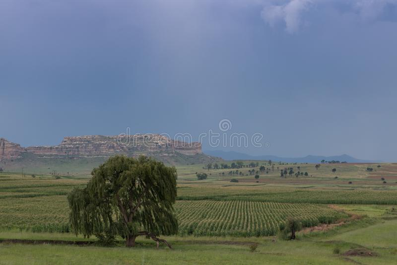 Zielony gospodarstwo rolne krajobraz z wierzbowym drzewem zdjęcia royalty free