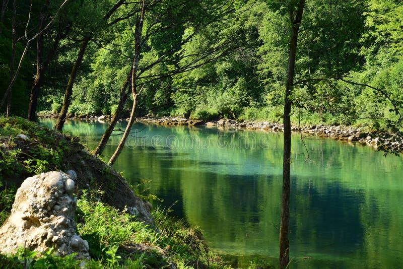 Zielony halny rzeczny Drina z otaczającymi drzewami zdjęcie stock