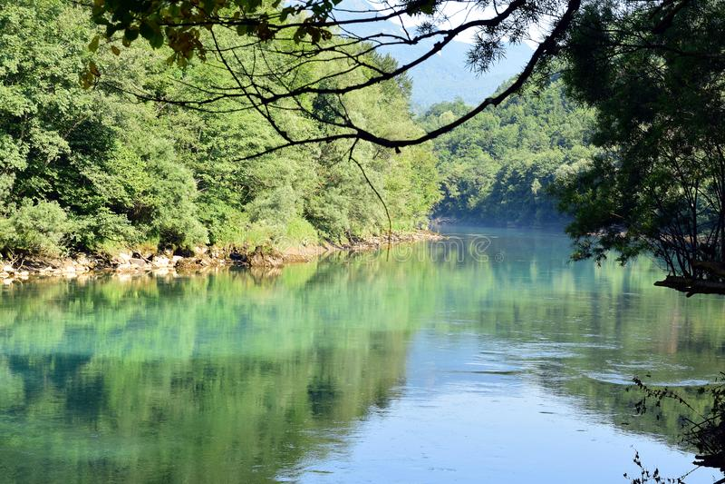 Zielony halny rzeczny Drina z otaczającymi drzewami obrazy stock
