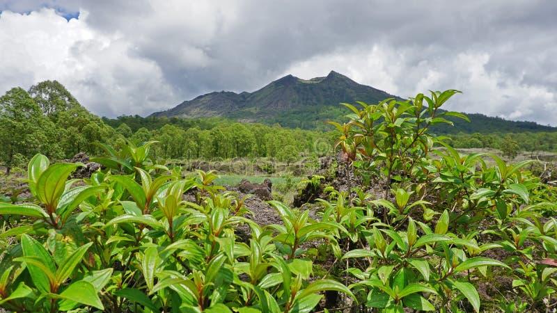 Zielony i świeży widok góra Batur, Kintamani, Bali, Indonezja, w porze deszczowej zdjęcie stock