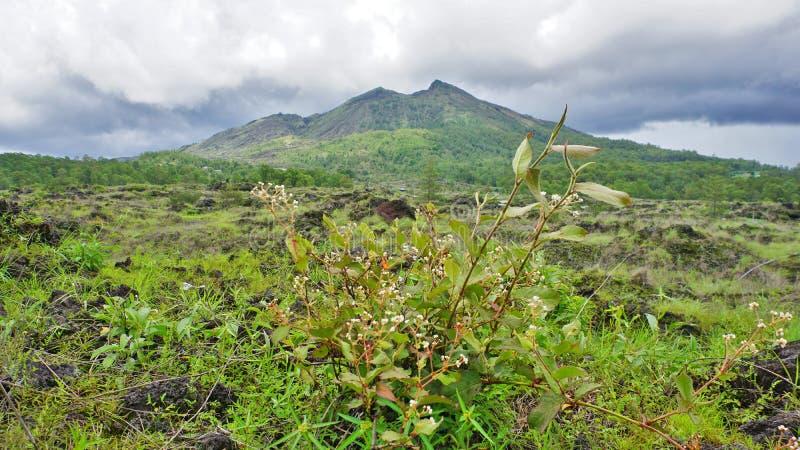 Zielony i świeży widok góra Batur, Kintamani, Bali, Indonezja, w porze deszczowej fotografia royalty free