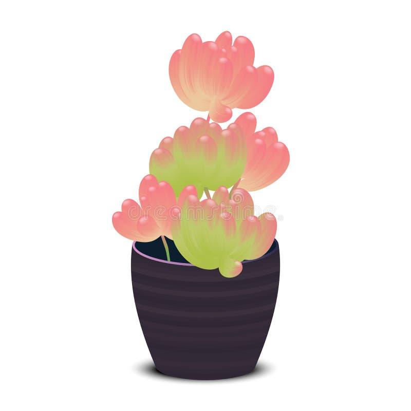 Zielony i czerwony Sedum Rubrotinctum lub galaretowa bobowa roślina ilustracja wektor