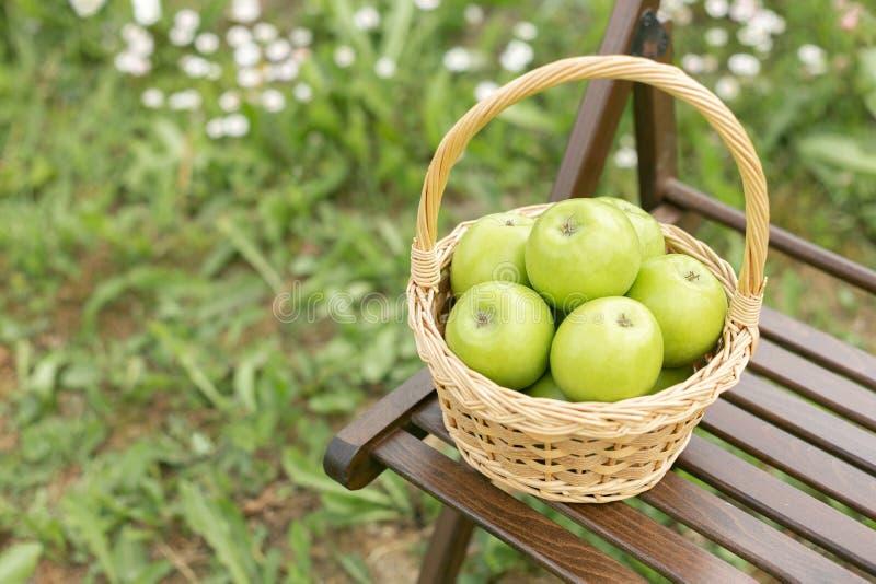 Zielony jabłko w łozinowym koszu na ogrodowego krzesła Zielonej trawy żniwa czasie fotografia stock