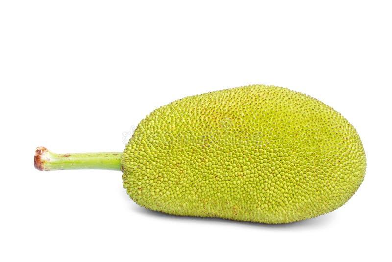Zielony jackfruit. obraz royalty free