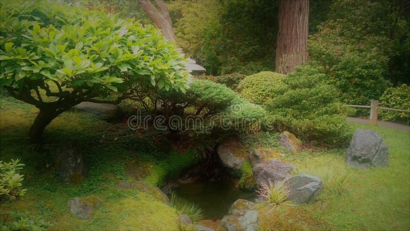 Zielony japończyka ogród z drzewami nad stawem zdjęcie stock