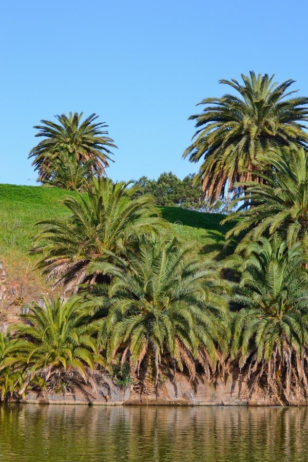 zielony jeziorny drzewko palmowe fotografia stock