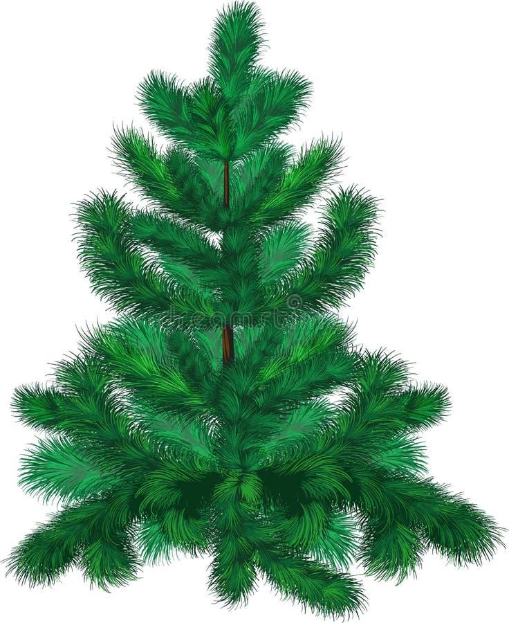 zielony jodły drzewo ilustracja wektor