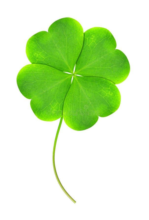 Zielony koniczynowy liść zdjęcia royalty free