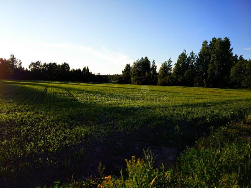 zielony krajobraz obrazy stock