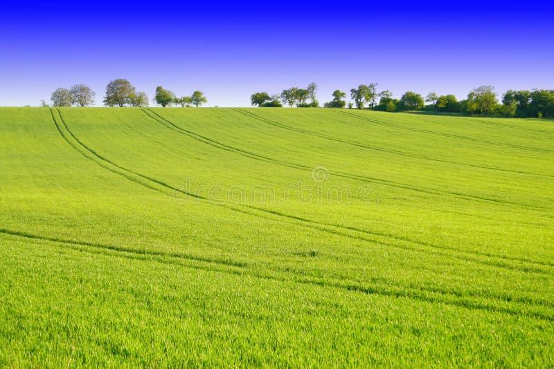 zielony krajobraz fotografia royalty free