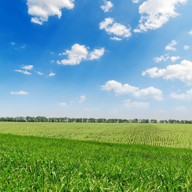 Download Zielony krajobraz i niebo obraz stock. Obraz złożonej z natura - 28953335