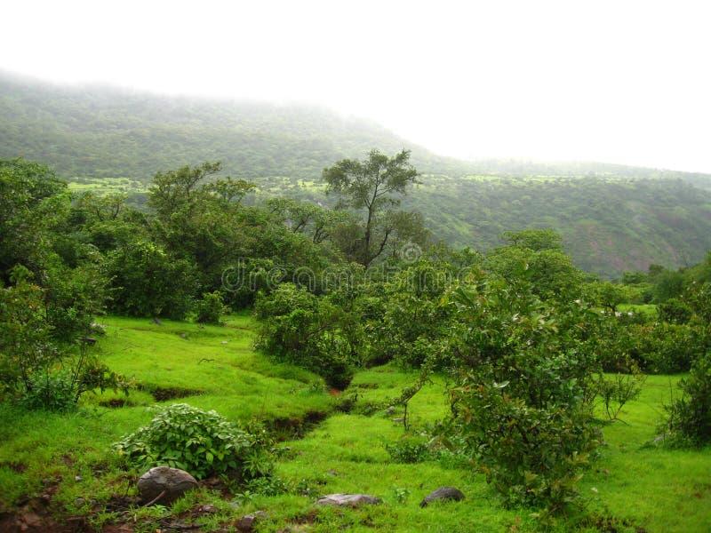 zielony krajobrazu wyjątkowy fotografia royalty free