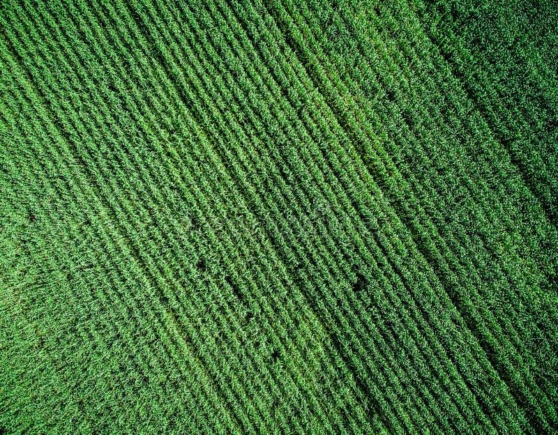 Zielony kraju pole z rzędem wykłada, odgórny widok obrazy royalty free