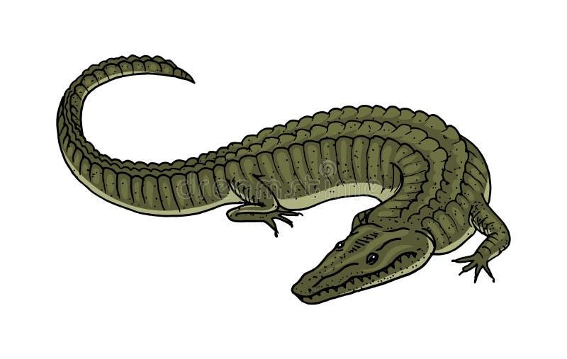 Zielony krokodyl, Amerykańskiego aligatora gada amfibia tropikalny zwierzę grawerująca ręka rysująca w starym rocznika nakreśleni royalty ilustracja