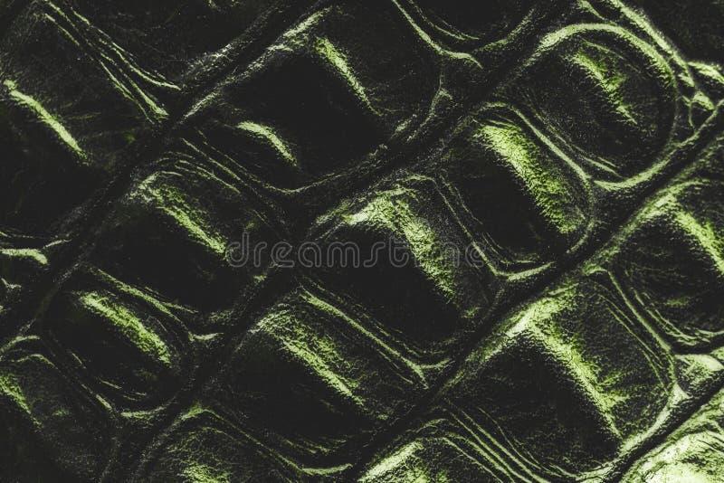 Zielony krokodyl skóry zbliżenie obrazy stock