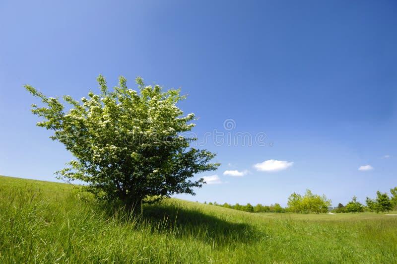 zielony krzew zdjęcia stock