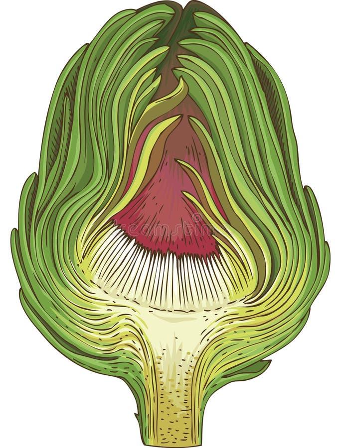Zielony kula ziemska karczoch w przekroju poprzecznym ilustracji