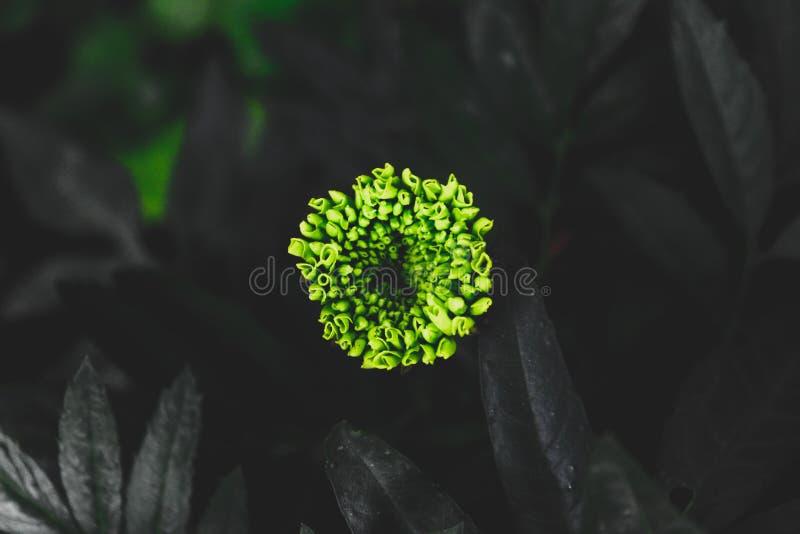 Zielony kwiat obraz stock