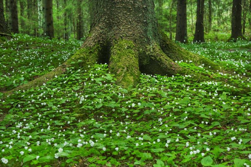 zielony lasów deszczowych zdjęcie stock