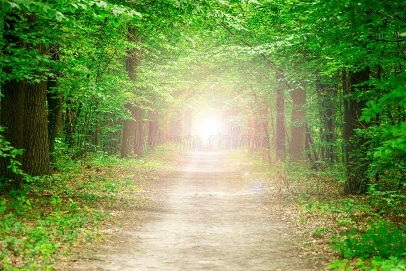Zielony las ścieżka przez drzew obrazy royalty free