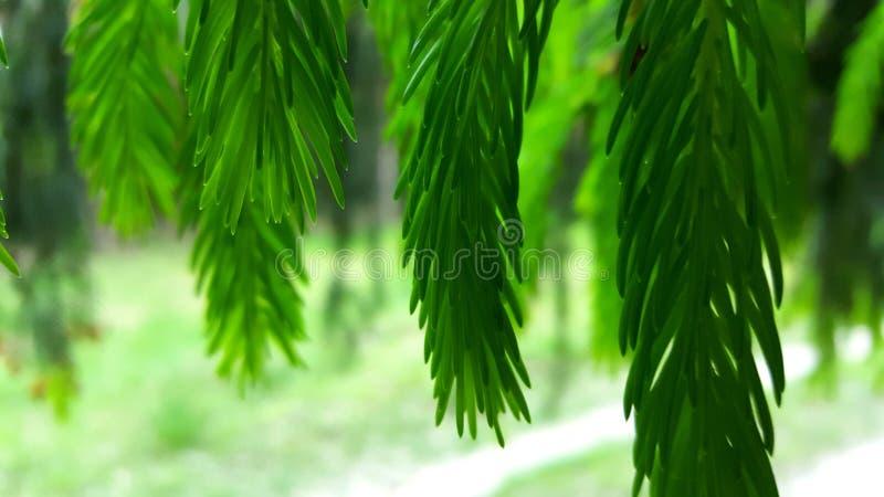 Zielony las obrazy royalty free