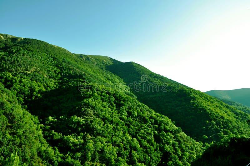 Zielony las na górze, natura, Hiszpania obrazy stock