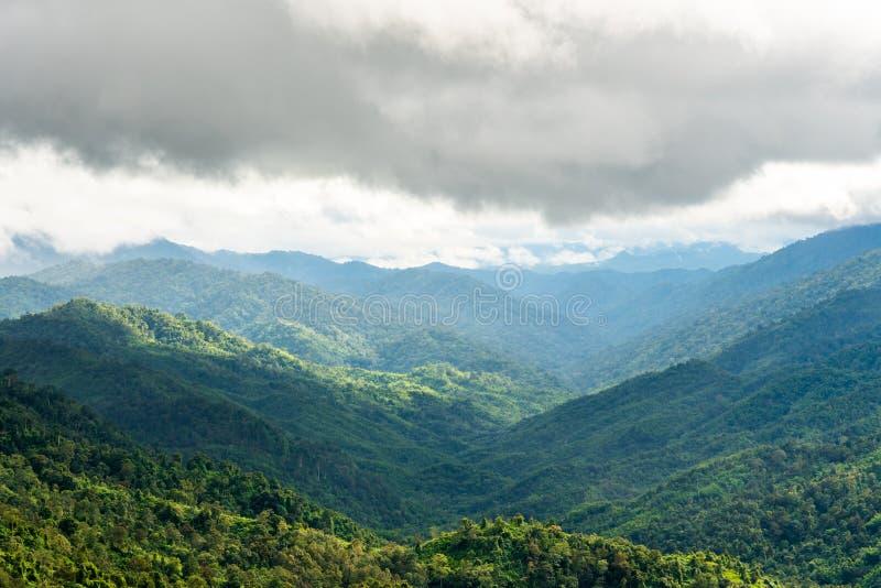Zielony las na pasmo górskie krajobrazie na mgiełka dniu przed padać zdjęcia royalty free