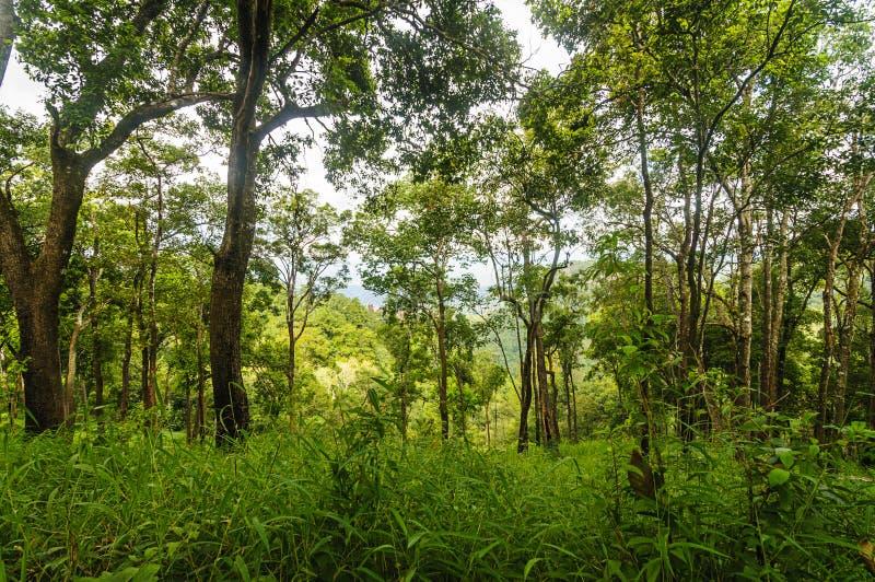 Zielony las przy Doi Luang Chiang Dao górą przy Chiang Mai prowincją, Tajlandia zdjęcia stock