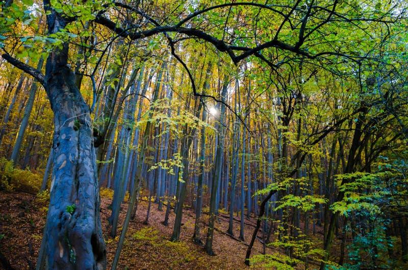 Zielony las w Mecsek, Węgry fotografia royalty free