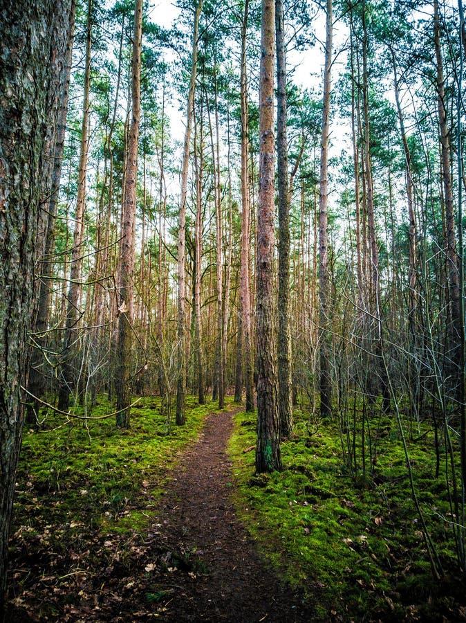 Zielony las z ścieżką zdjęcia royalty free