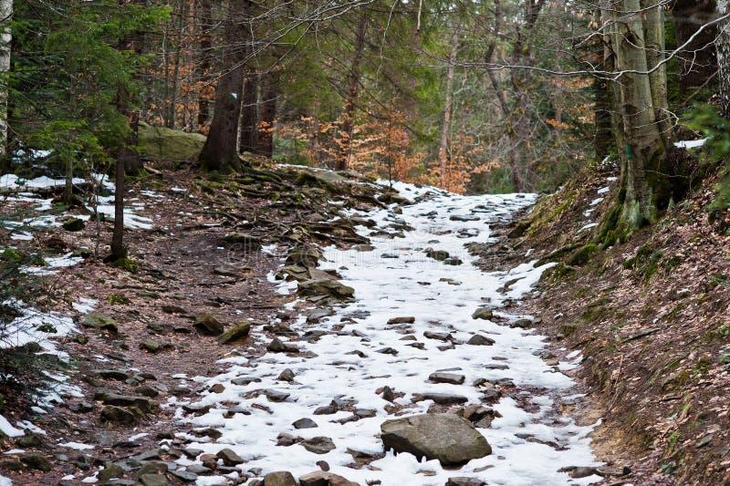 Zielony las z małą śnieżnej pokrywy drogą w Carpathians górach zdjęcia royalty free