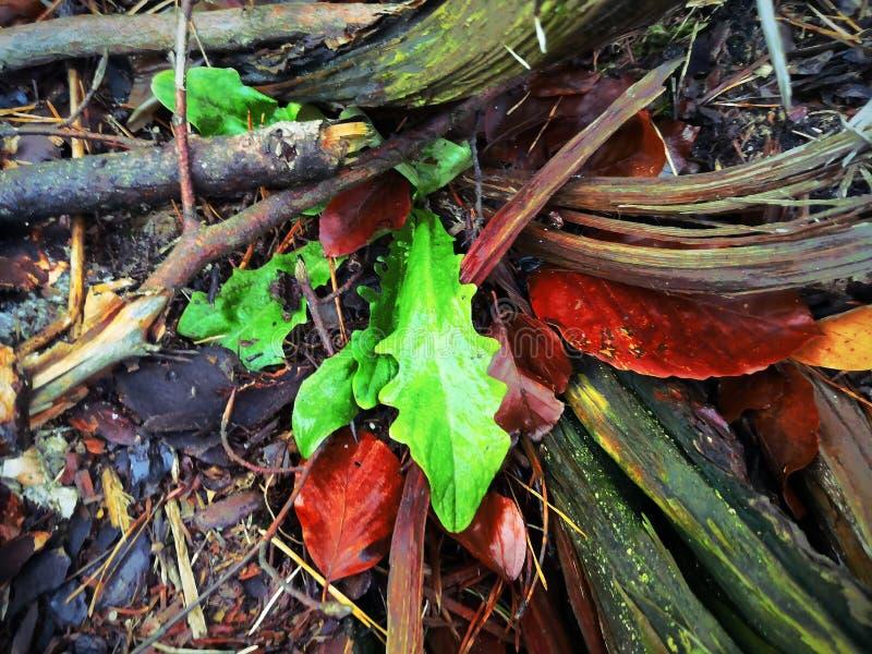 Zielony liść na tle gałąź i trawa obrazy stock