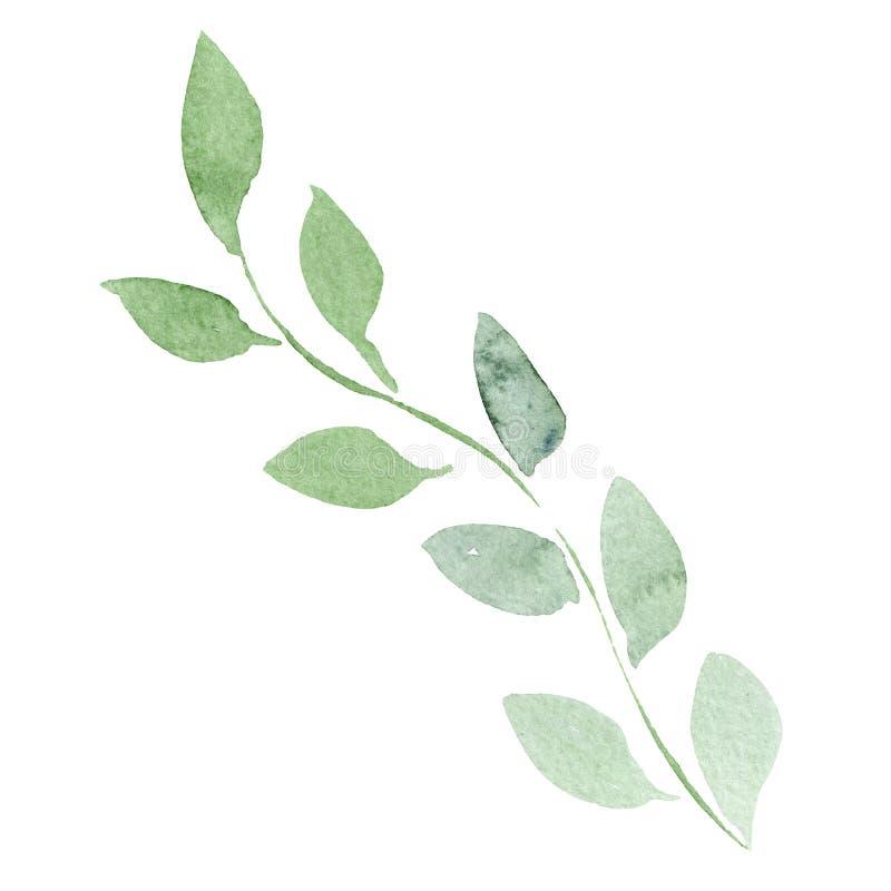 zielony liść Liść rośliny ogródu botanicznego kwiecisty ulistnienie tła bazy projekta ustalona akwarela Odosobniony liść ilustrac royalty ilustracja