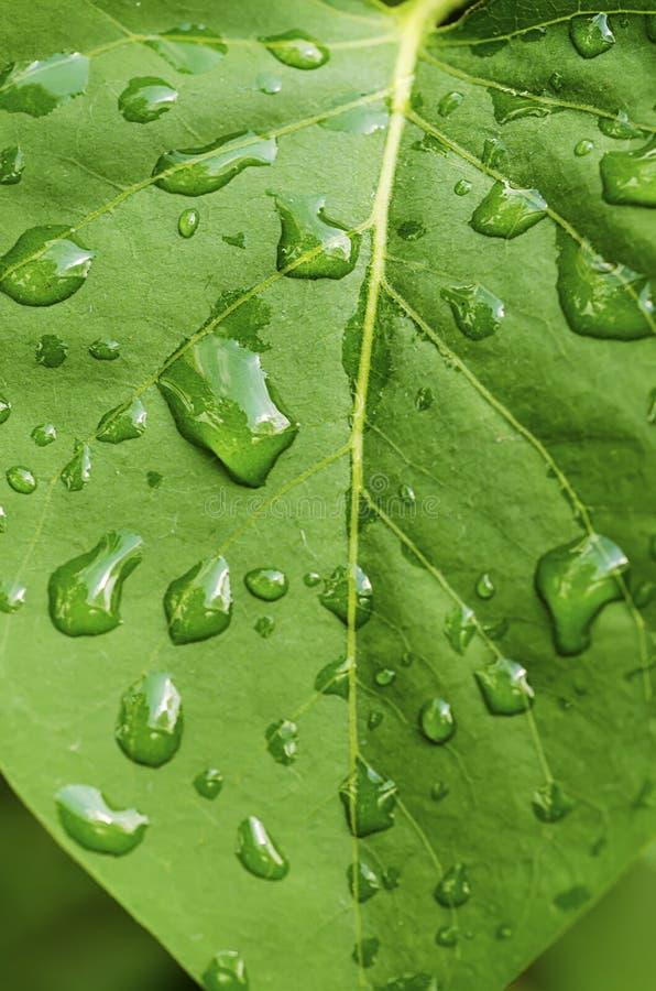 Download Zielony liść zdjęcie stock. Obraz złożonej z szczegółowy - 53780764