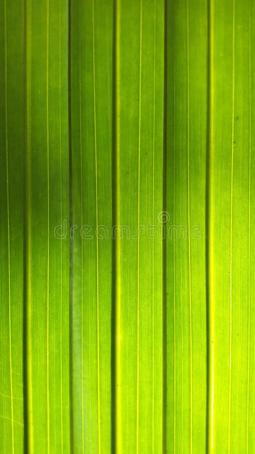 zielony liść zdjęcia royalty free