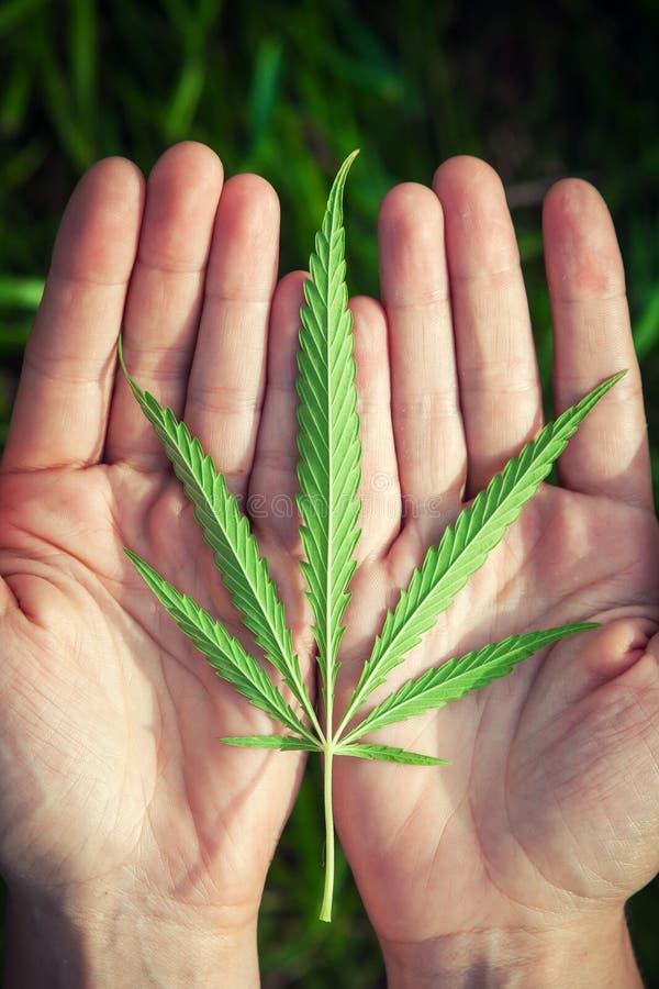 Zielony liść canabis fotografia royalty free