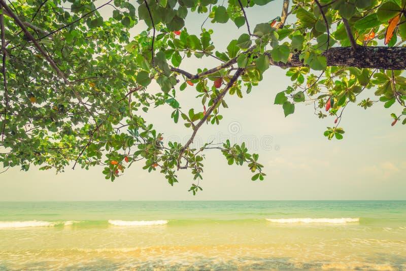 Download Zielony Liść (Filtrujący Wizerunek Przetwarzający Rocznik Obraz Stock - Obraz złożonej z plaża, natura: 57652121