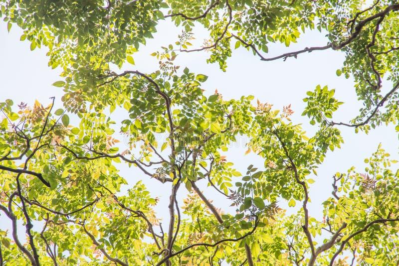Zielony liść na nieba tle w ogródzie używać jako tło, świeży liść tapety pojęcie fotografia royalty free