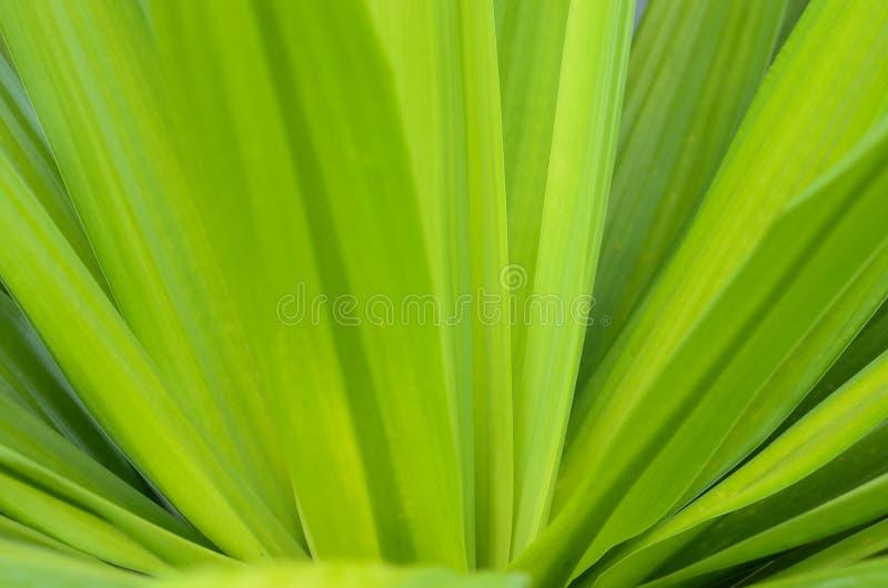 Zielony liść na zamazanym zielonym tle z kopii przestrzenią dla teksta fotografia stock