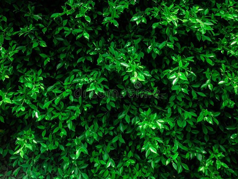 Zielony liść od małego drzewa przy społeczeństwem obraz stock