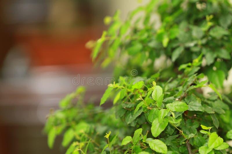 zielony liść przy naturą z powrotem mlejącą fotografia stock