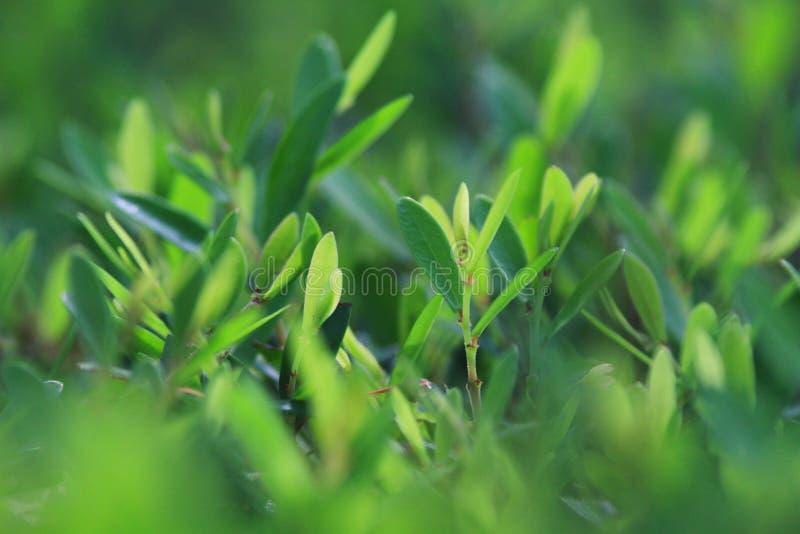 zielony liść rośliny zakończenie up zdjęcia stock