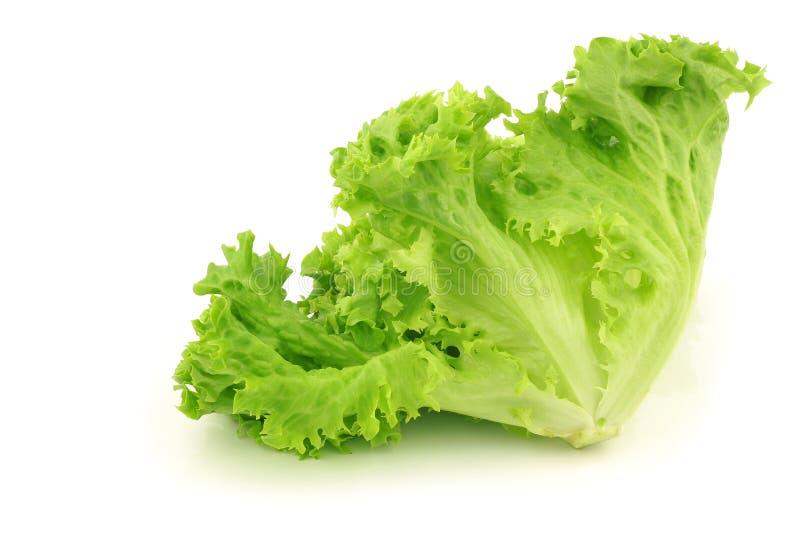 zielony liść sałaty lollo luźny fotografia royalty free