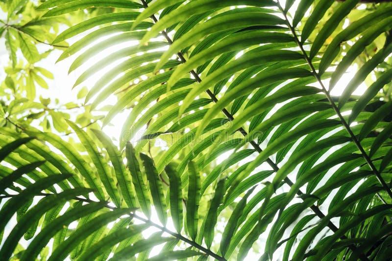 Zielony liść wyszczególnia światła słonecznego Tropikalnego tła plenerową naturę fotografia royalty free