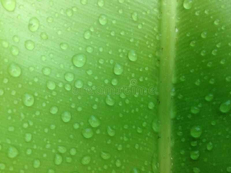 zielony liść z kropli wodą zdjęcia stock